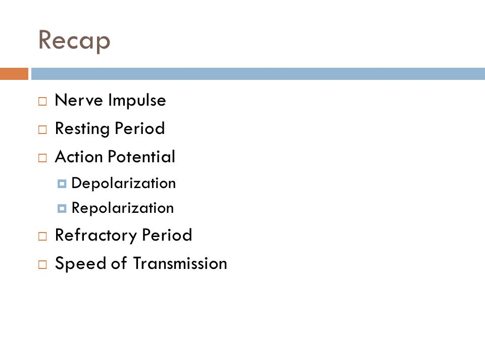 Recap Nerve Impulse Resting Period Action Potential Refractory Period