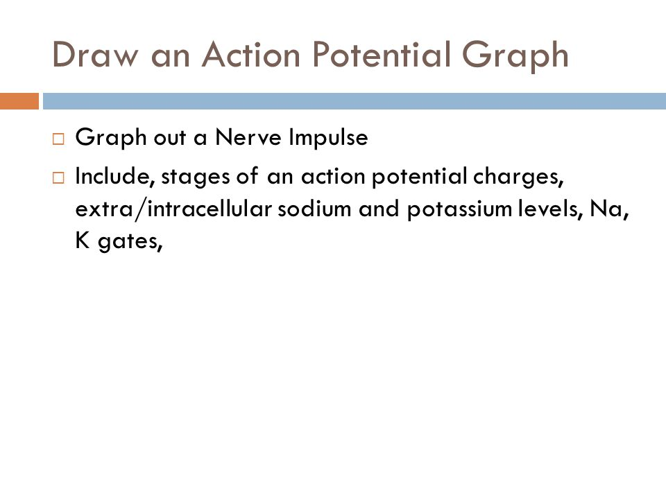 Draw an Action Potential Graph
