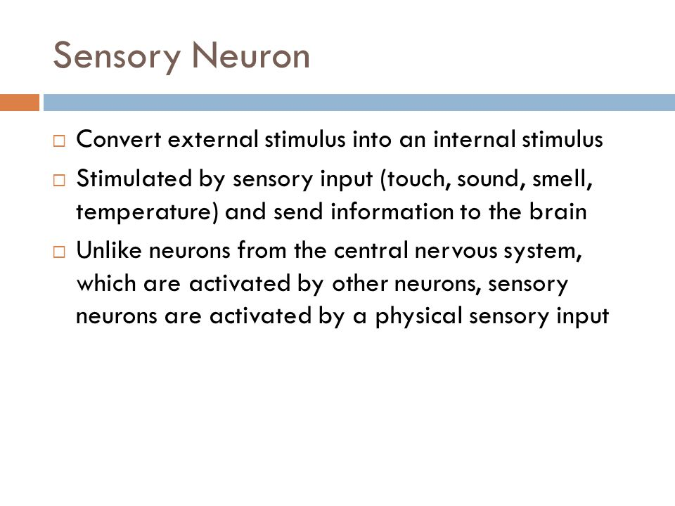 Sensory Neuron Convert external stimulus into an internal stimulus