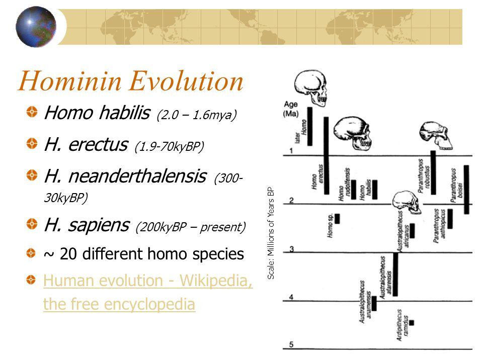 Hominin Evolution Homo habilis (2.0 – 1.6mya) H. erectus (1.9-70kyBP)