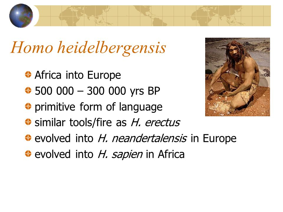 Homo heidelbergensis Africa into Europe – yrs BP