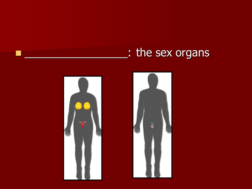 _________________: the sex organs