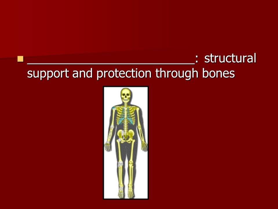 _________________________: structural support and protection through bones