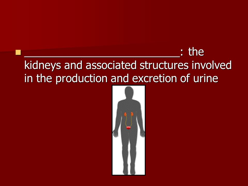__________________________: the kidneys and associated structures involved in the production and excretion of urine