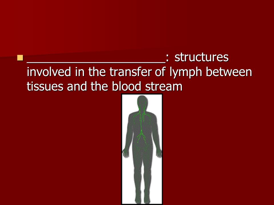 _____________________: structures involved in the transfer of lymph between tissues and the blood stream