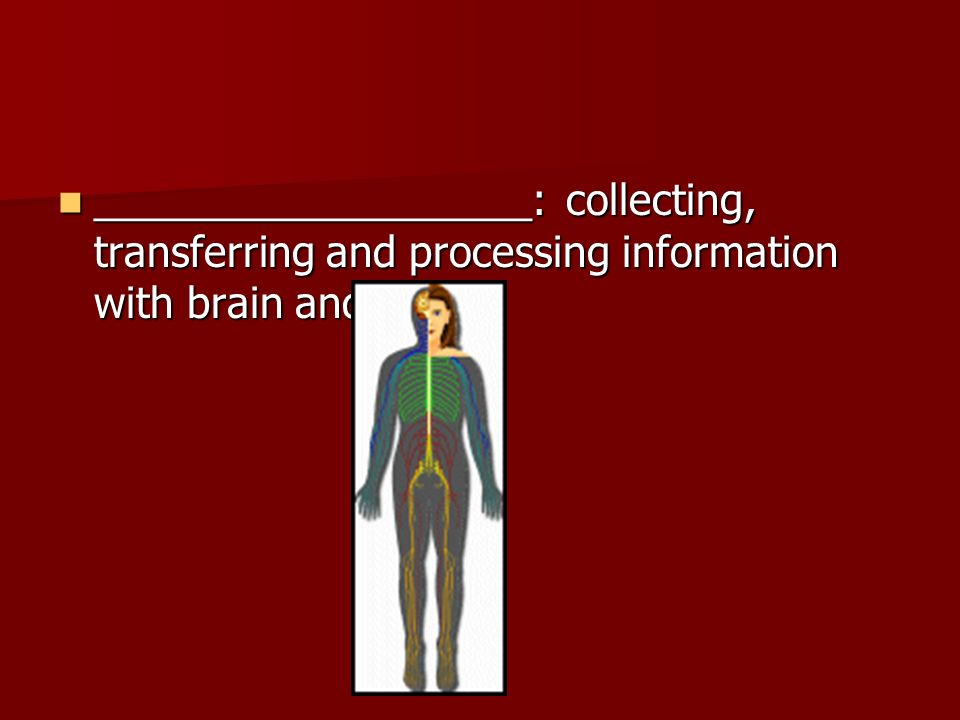 ___________________: collecting, transferring and processing information with brain and nerves