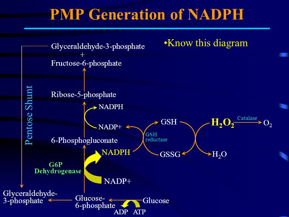 PMP Generation of NADPH