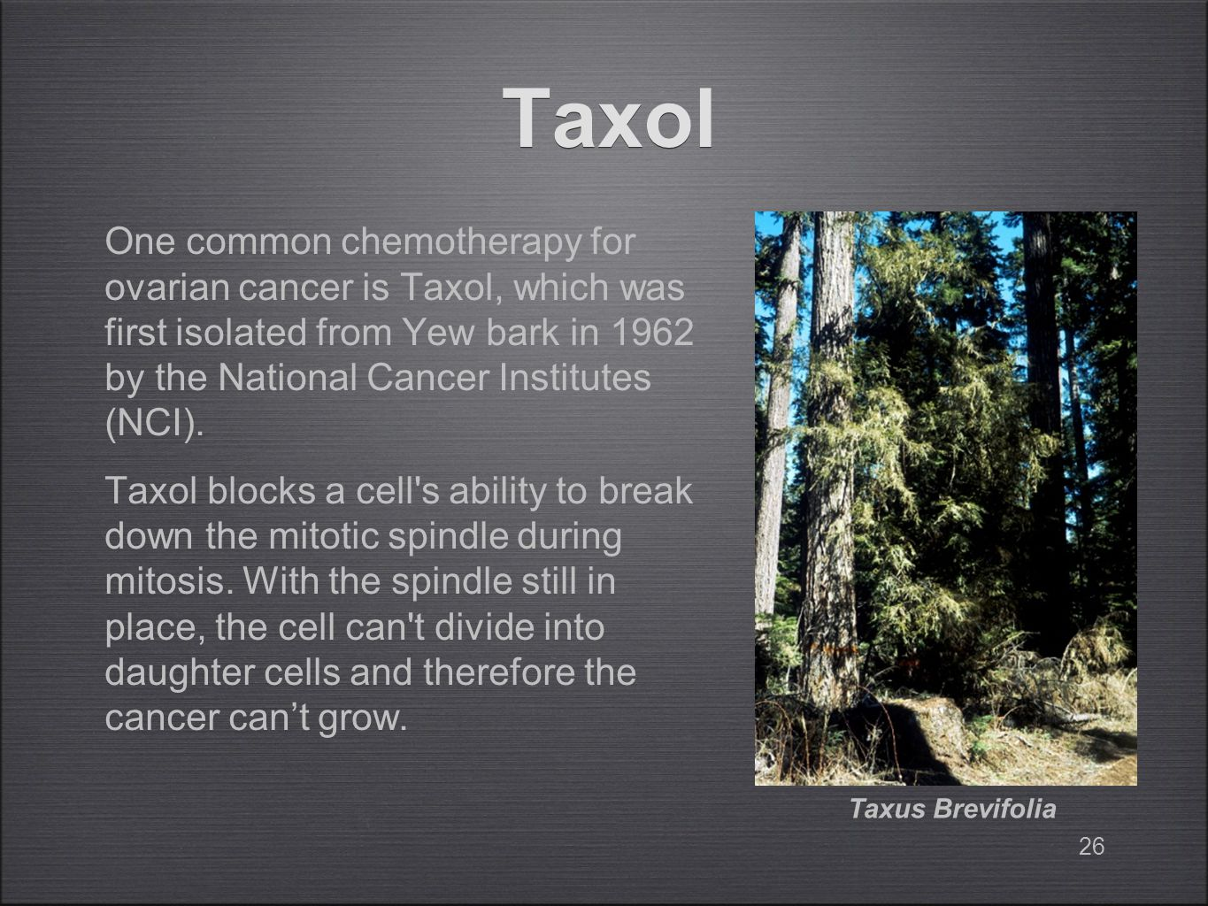 Taxol One common chemotherapy for ovarian cancer is Taxol, which was first isolated from Yew bark in 1962 by the National Cancer Institutes (NCI).