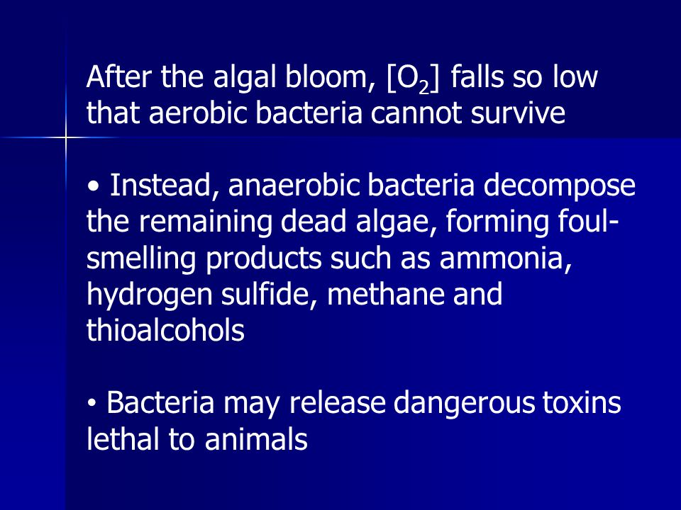 After the algal bloom, [O2] falls so low that aerobic bacteria cannot survive