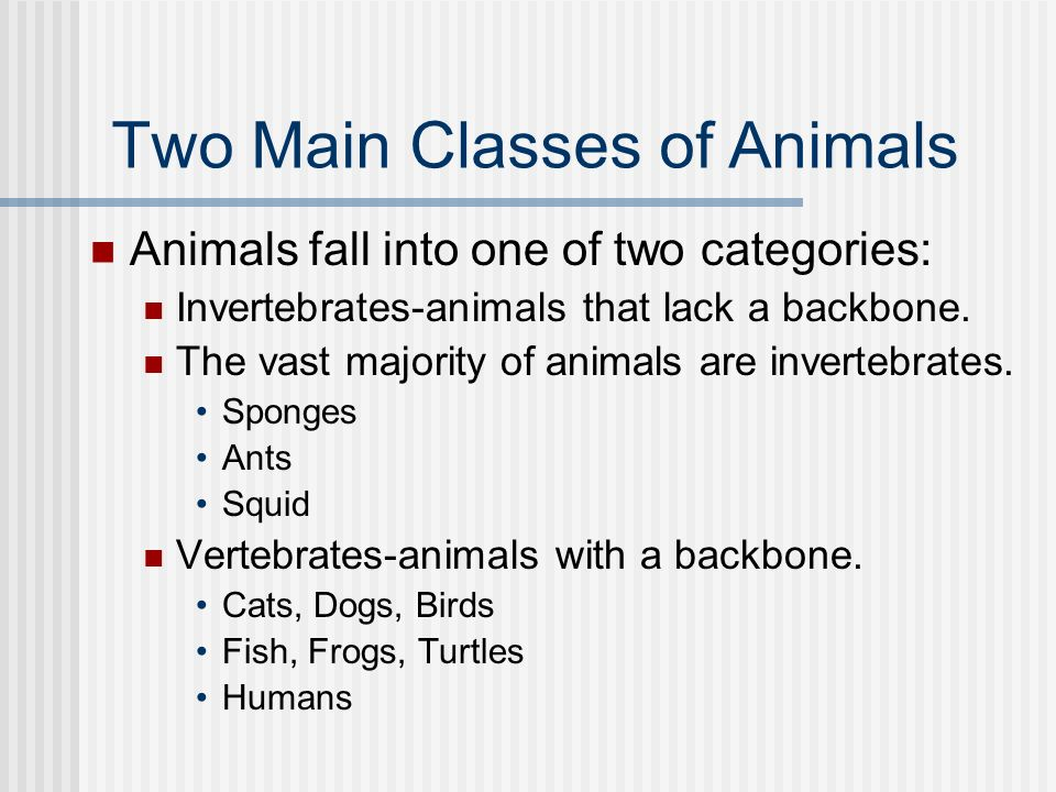 Two Main Classes of Animals