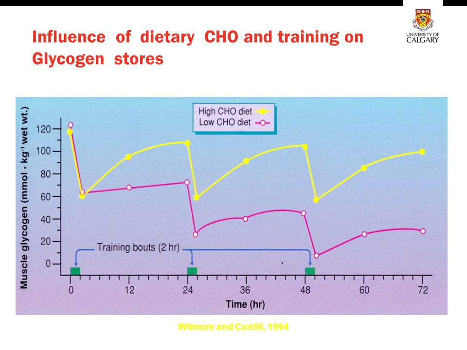 Influence of dietary CHO and training on Glycogen stores