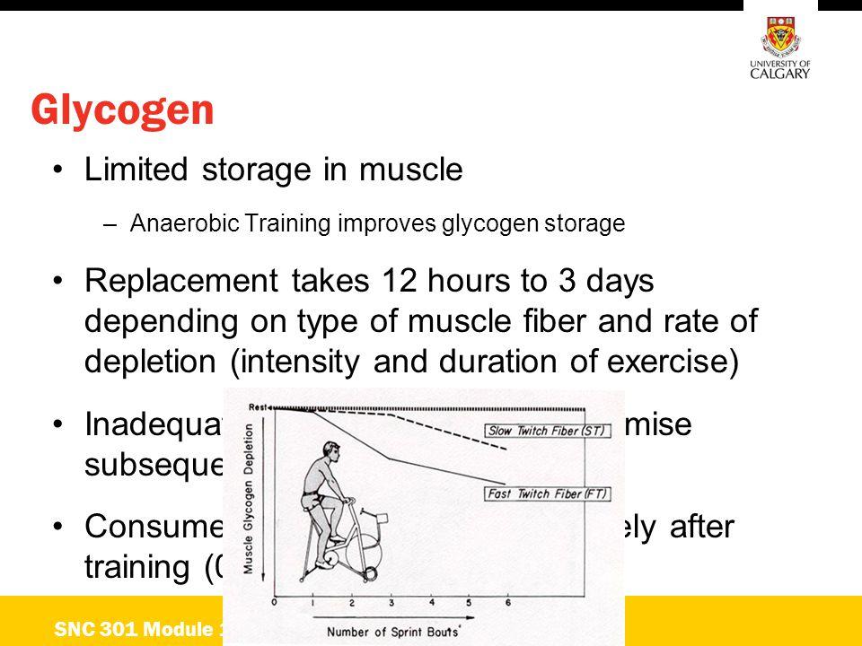 Glycogen Limited storage in muscle