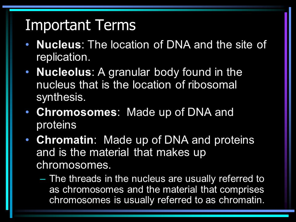 Important Terms Nucleus: The location of DNA and the site of replication.