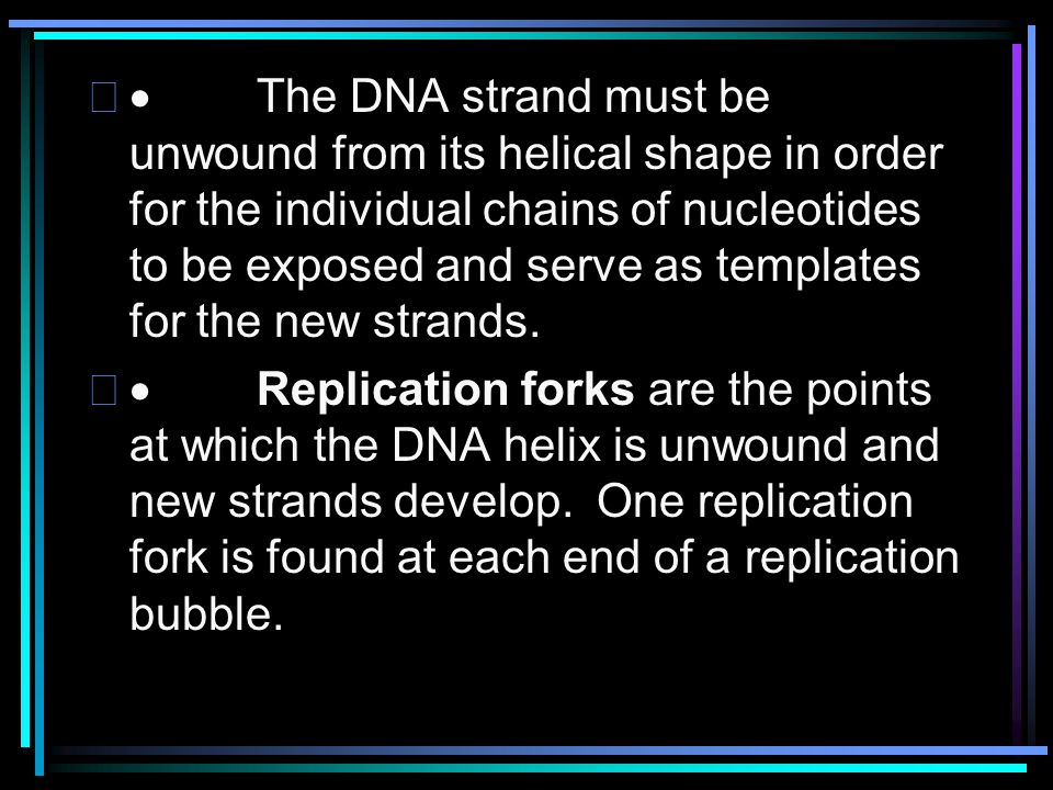 · The DNA strand must be unwound from its helical shape in order for the individual chains of nucleotides to be exposed and serve as templates for the new strands.