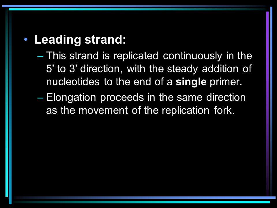 Leading strand: