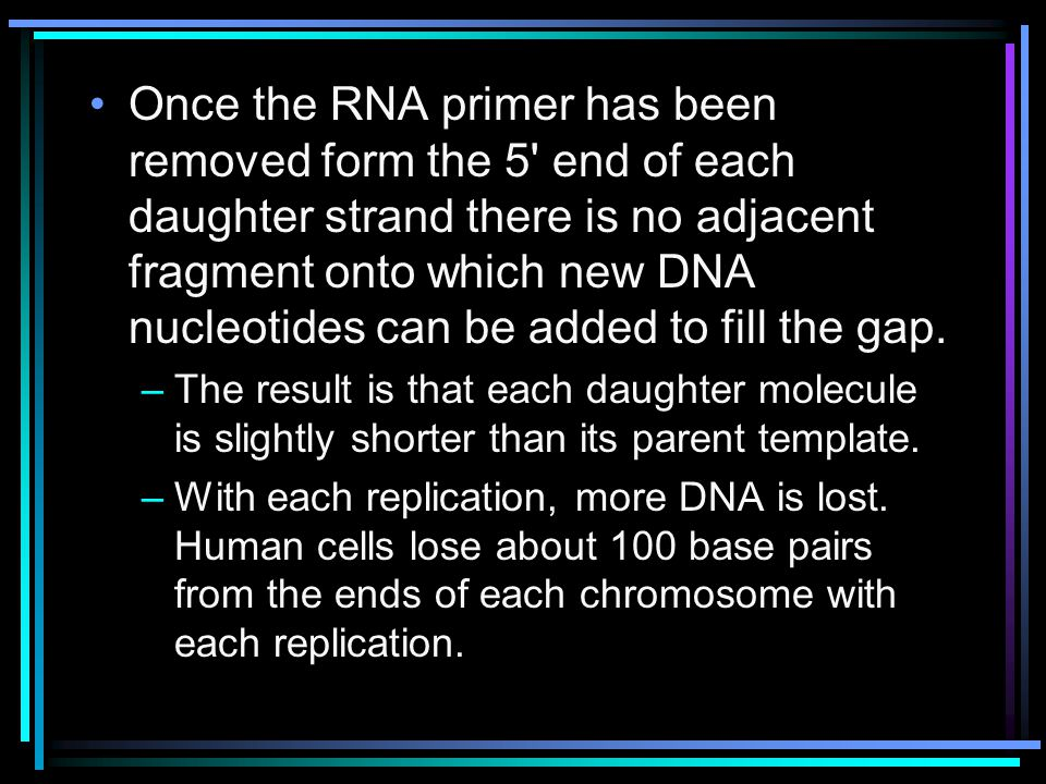 Once the RNA primer has been removed form the 5 end of each daughter strand there is no adjacent fragment onto which new DNA nucleotides can be added to fill the gap.