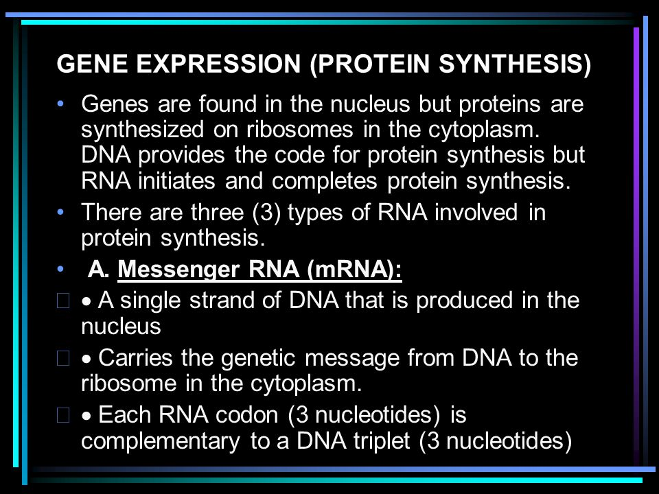 GENE EXPRESSION (PROTEIN SYNTHESIS)