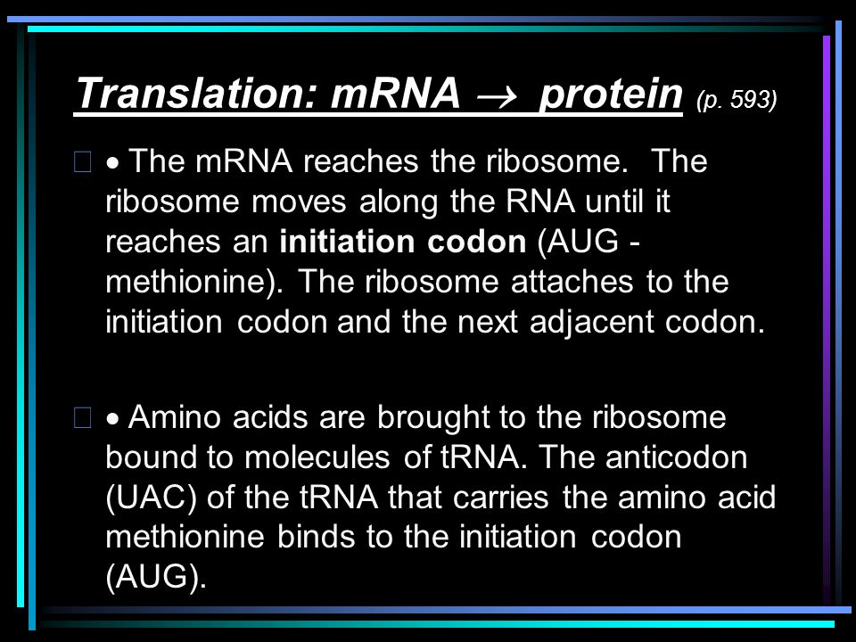 Translation: mRNA  protein (p. 593)