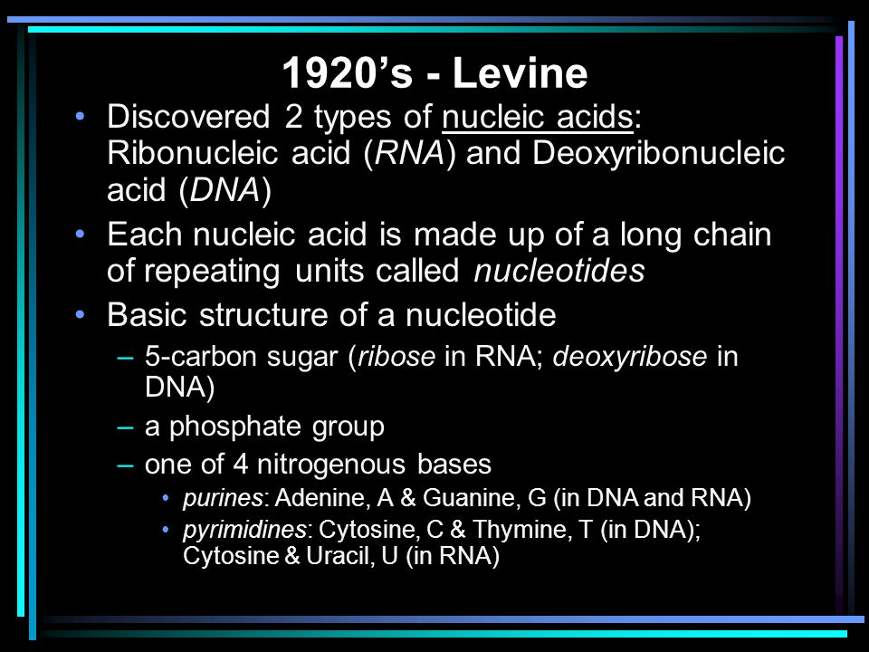 1920's - Levine Discovered 2 types of nucleic acids: Ribonucleic acid (RNA) and Deoxyribonucleic acid (DNA)