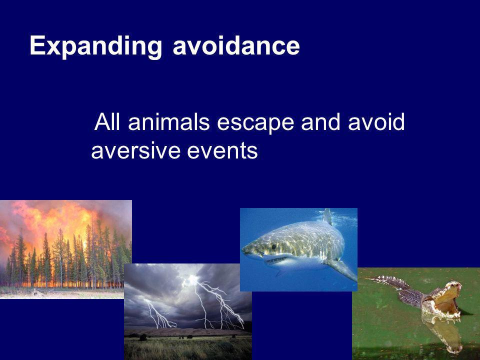 Expanding avoidance All animals escape and avoid aversive events