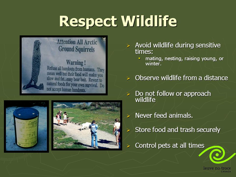 Respect Wildlife Avoid wildlife during sensitive times:
