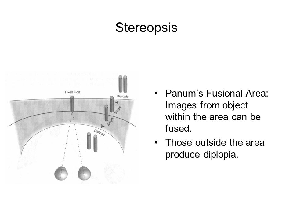 Stereopsis Panum's Fusional Area: Images from object within the area can be fused.