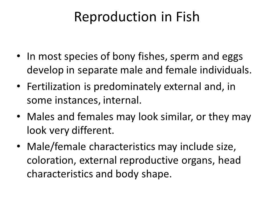 Reproduction in Fish In most species of bony fishes, sperm and eggs develop in separate male and female individuals.