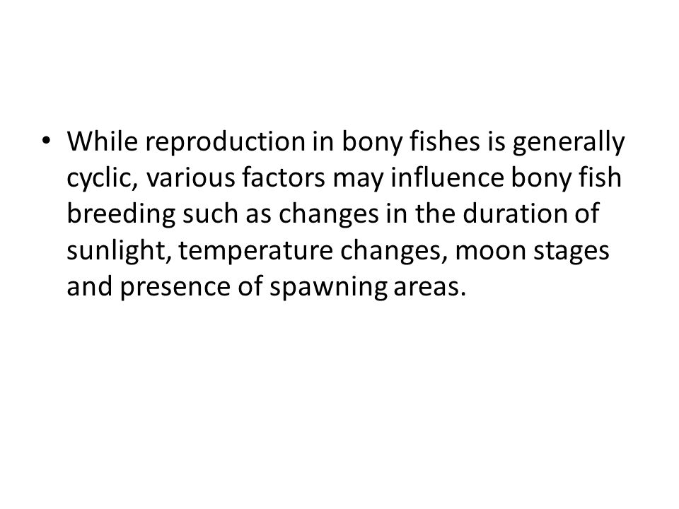 While reproduction in bony fishes is generally cyclic, various factors may influence bony fish breeding such as changes in the duration of sunlight, temperature changes, moon stages and presence of spawning areas.