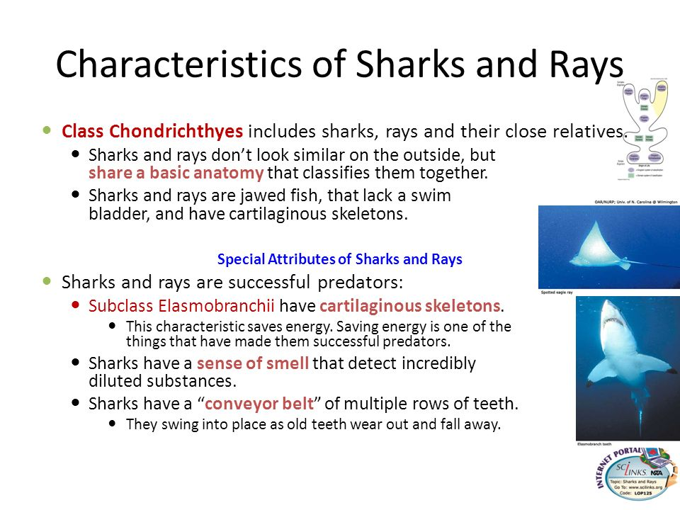 Characteristics of Sharks and Rays