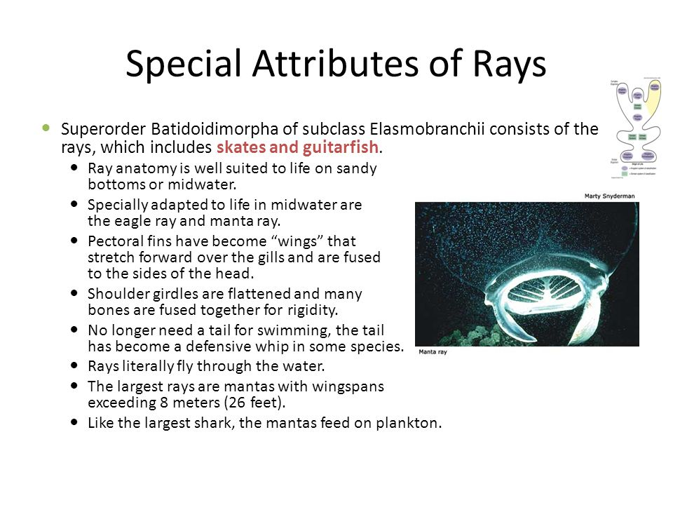 Special Attributes of Rays