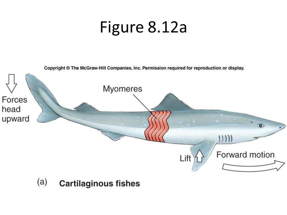 Figure 8.12a