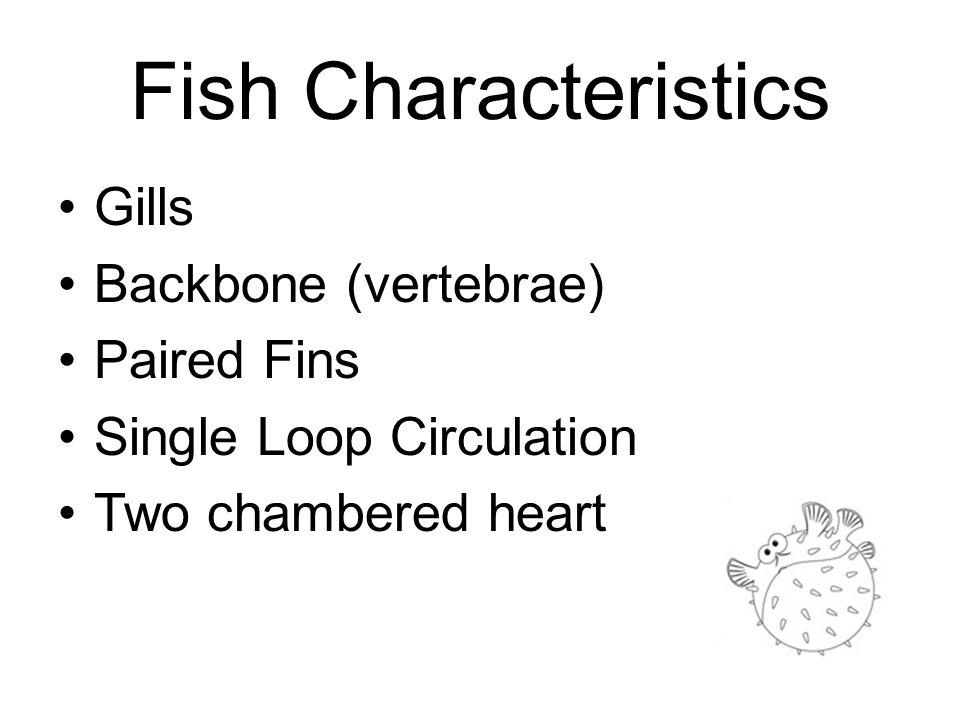 Fish Characteristics Gills Backbone (vertebrae) Paired Fins