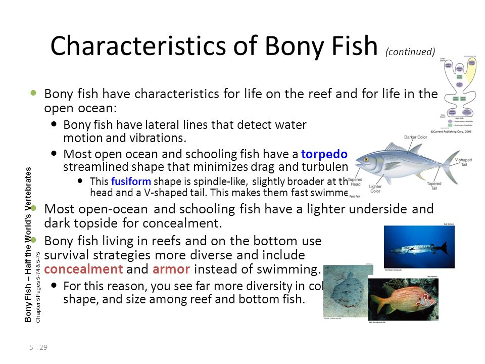 Characteristics of Bony Fish (continued)