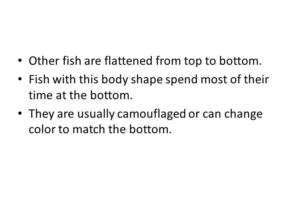 Other fish are flattened from top to bottom.