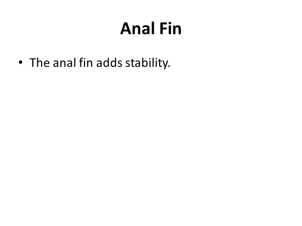 Anal Fin The anal fin adds stability.