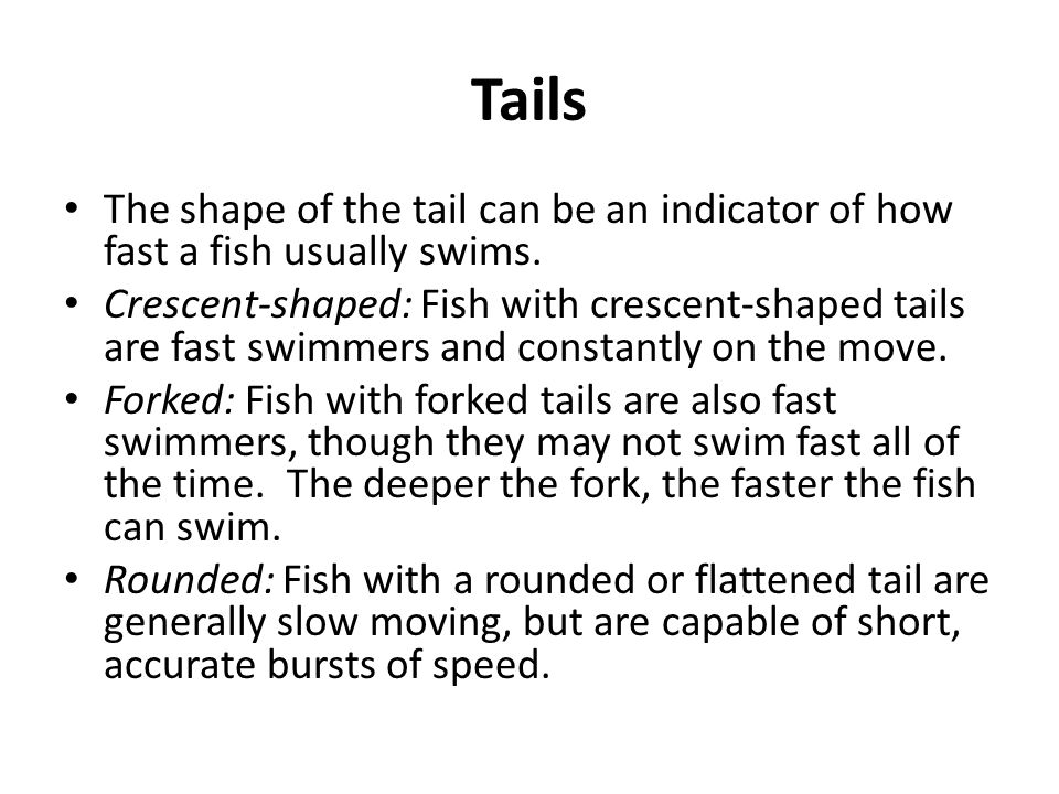 Tails The shape of the tail can be an indicator of how fast a fish usually swims.