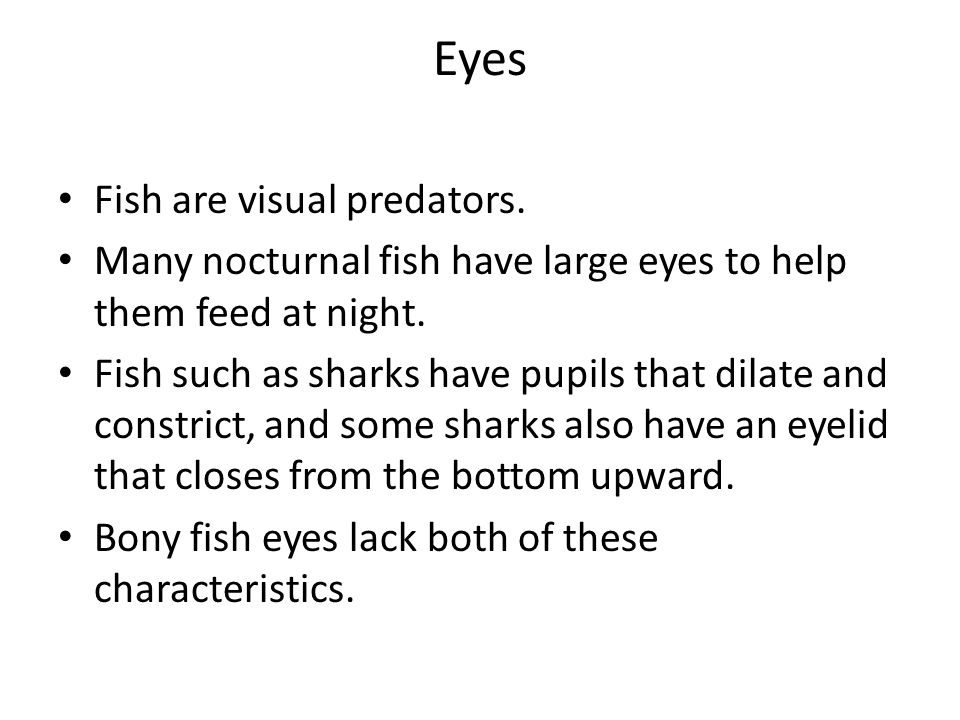 Eyes Fish are visual predators.