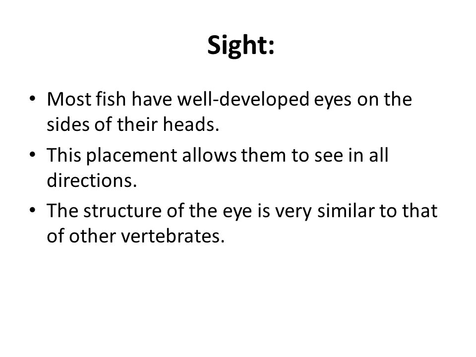 Sight: Most fish have well-developed eyes on the sides of their heads.
