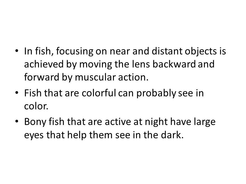 In fish, focusing on near and distant objects is achieved by moving the lens backward and forward by muscular action.