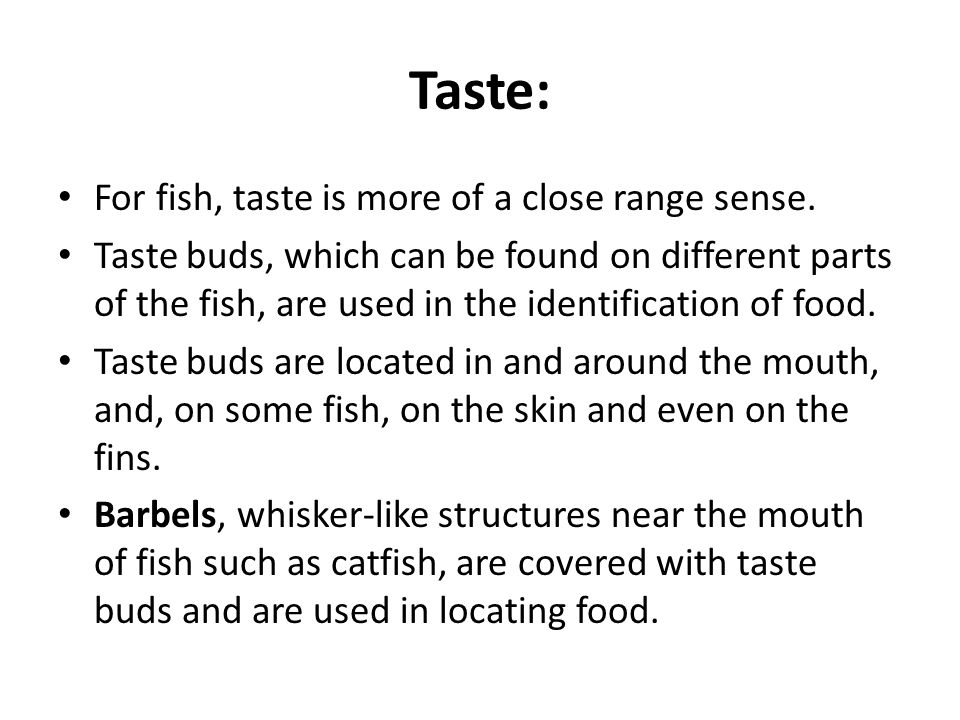 Taste: For fish, taste is more of a close range sense.