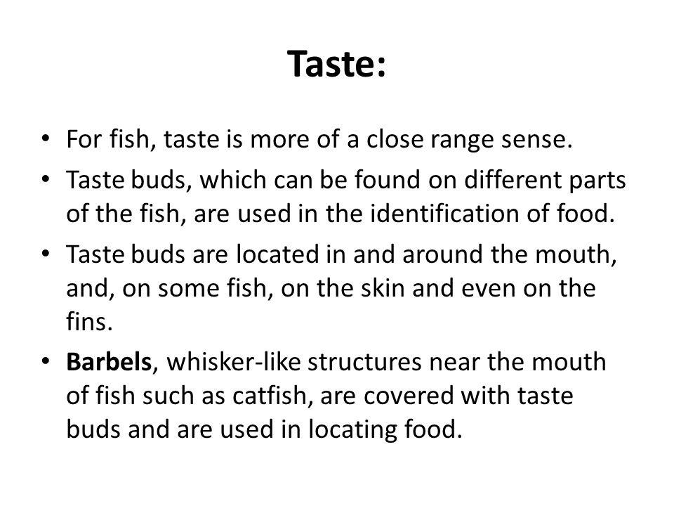 Taste: For fish, taste is more of a close range sense.