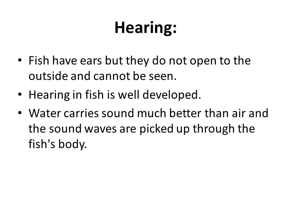 Hearing: Fish have ears but they do not open to the outside and cannot be seen. Hearing in fish is well developed.