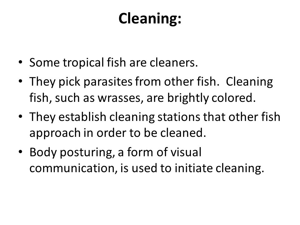 Cleaning: Some tropical fish are cleaners.