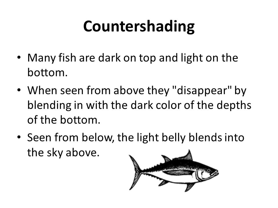 Countershading Many fish are dark on top and light on the bottom.