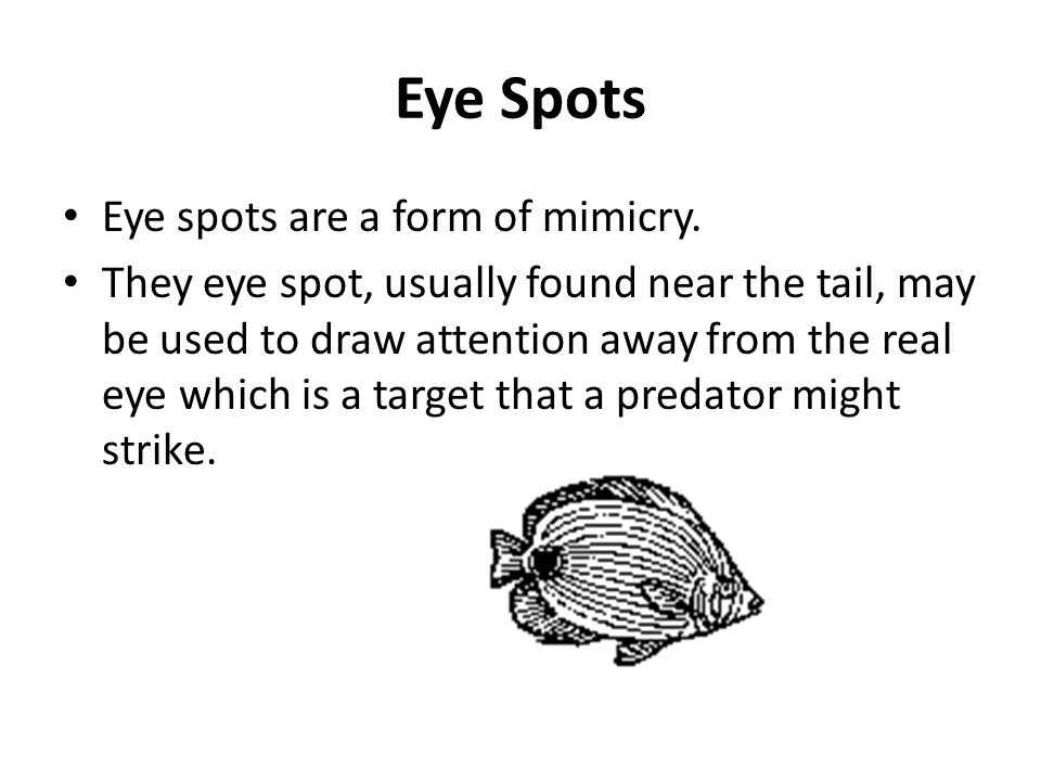 Eye Spots Eye spots are a form of mimicry.
