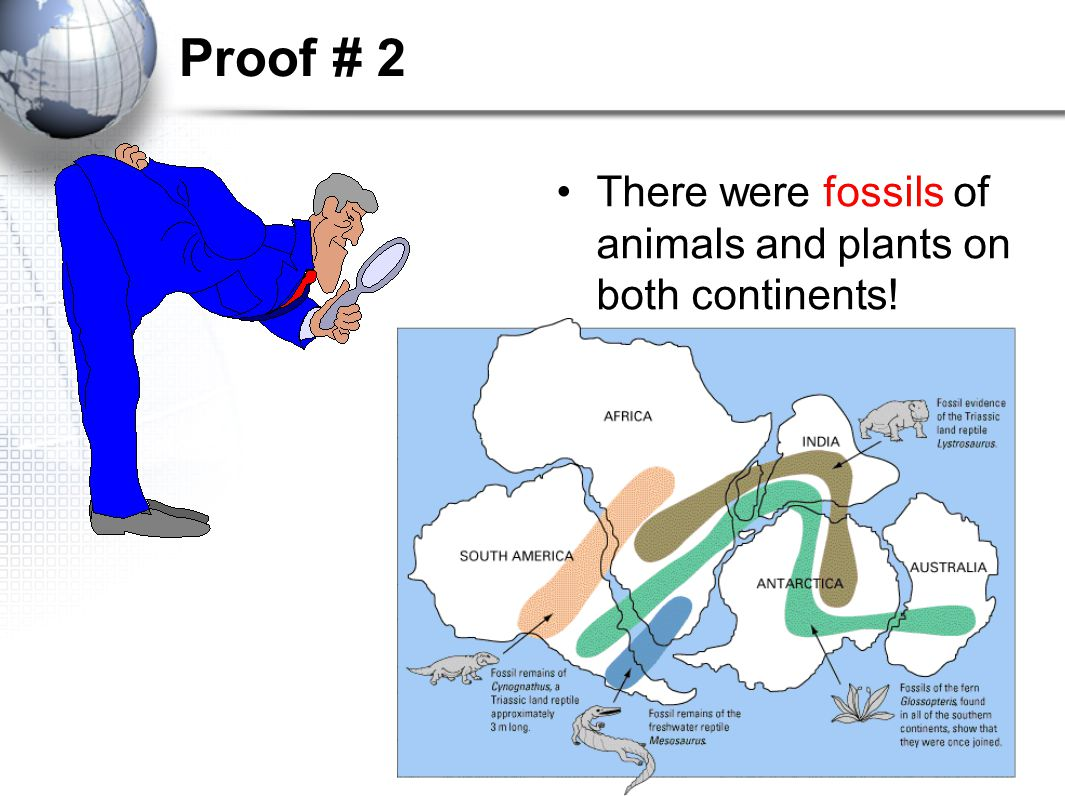 Proof # 2 There were fossils of animals and plants on both continents!