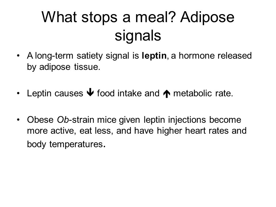 What stops a meal Adipose signals