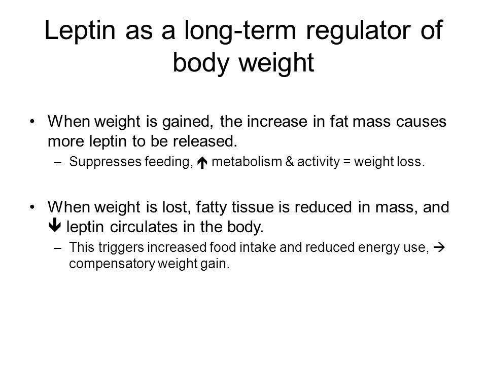 Leptin as a long-term regulator of body weight