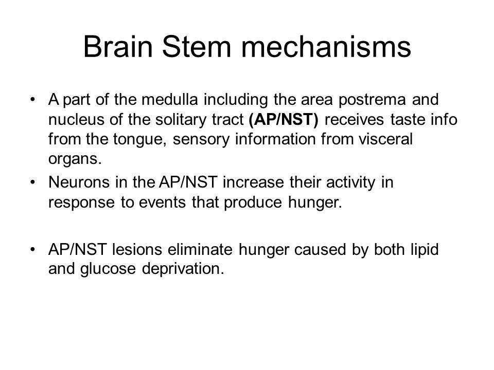 Brain Stem mechanisms