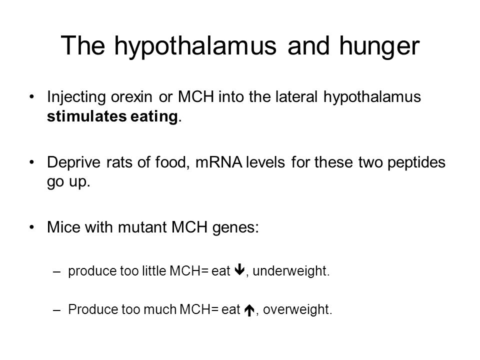 The hypothalamus and hunger